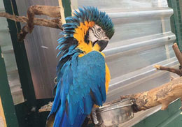 Blue Parrot at Fitzpatrick's Petting Zoo